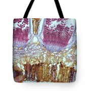 Wheat Rust Puccinia Graminis Tote Bag