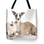 Whippet And Siamese Kitten Tote Bag