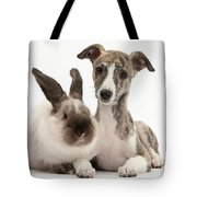 Whippet Pup With Colorpoint Rabbit Tote Bag