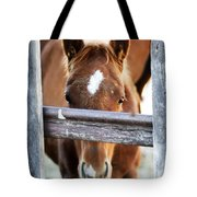 Whiskers 1 Tote Bag