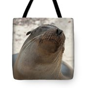 Whiskers On The Face Of A Fur Seal Tote Bag