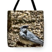 White-bellied Cuckoo-shrike Tote Bag