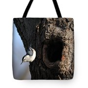 White Breasted Nuthatch Tote Bag