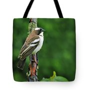 White-browed Sparrow-weaver Tote Bag