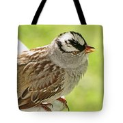 White Crowned Sparrow II Tote Bag