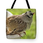 White Crowned Sparrow Sends A Warning Tote Bag