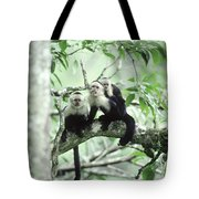 White-faced Capuchins Tote Bag