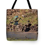 White-faced Ibis Mating Behavior In Early Spring Tote Bag