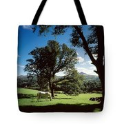 White Horse At Powerscourt, Co Wicklow Tote Bag