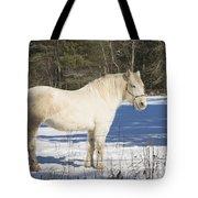White Horse In Winter Maine Tote Bag