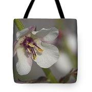 White Mullein - Verbascum Lychnitis Wildflower Tote Bag