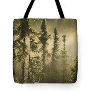 White Spruce In Mist At Sunrise Tote Bag