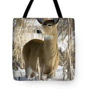 White-tailed Deer In A Snow-covered Tote Bag