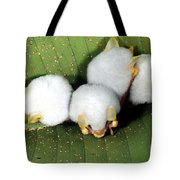 White Tent-making Bats Tote Bag
