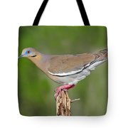 White Winged Dove Tote Bag
