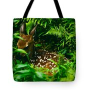 Whitetail Fawn And Ferns Tote Bag