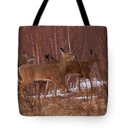 Whitetails On The Move Tote Bag