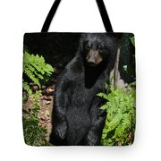 Whose Coming To Visit? Tote Bag