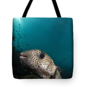 Wide-angle Image Of Pufferfish, Raja Tote Bag