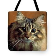 Wide-eyed Maine Coon Cat Tote Bag