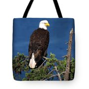 Wild Bald Eagle On Fir Tree Tote Bag