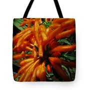 Wild Dagga Tote Bag by Daniele Smith