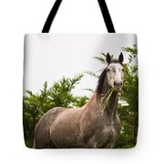 Wild Horse In The Wilderness Tote Bag