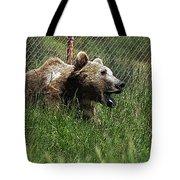 Wild Life Safari Bear Tote Bag
