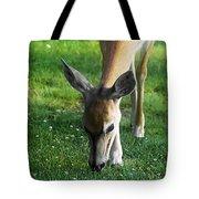 Wildlife Beauty Tote Bag