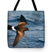 Wilson's Storm-petrel Tote Bag
