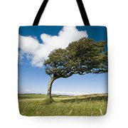 Wind-swept Solitary Tree On Open Grassy Tote Bag