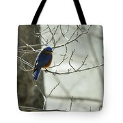 Winter Bluebird Tote Bag