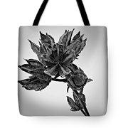 Winter Dormant Rose Of Sharon - Bw Tote Bag