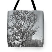 Winter Sycamore Tote Bag