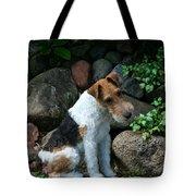 Wirehair Fox Terrier Tote Bag