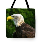 Wisconsin Bald Eagle Tote Bag