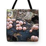 Wolf's Milk Slime Mold - Lycogala Epidendrum Tote Bag