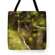 Wonky Eyed Tiger Tote Bag