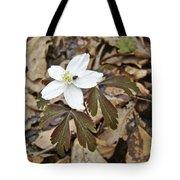 Wood Anemone - Anemone Quinquefolia Tote Bag