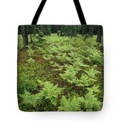 Woodland View In A Pine Forest Tote Bag