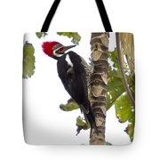 Woodpecker 1 Tote Bag