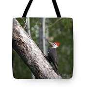Woodpecker Sizes Me Up Tote Bag
