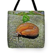 Working On My Tan - Arion Subfuscus Slug Tote Bag