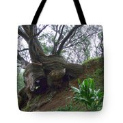 Wrap Around Tree Tote Bag