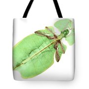 X-ray Of A Giant Leaf Insect Tote Bag by Ted Kinsman