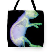 X-ray Of A Rabbit Tote Bag