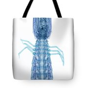 X-ray Of Mantis Shrimp Tote Bag