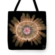 X-ray Of Shingle Urchin Tote Bag
