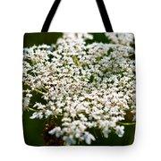 Yarrow Plant Flower Head  Tote Bag