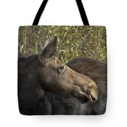 Yearling Calf On Alert Tote Bag